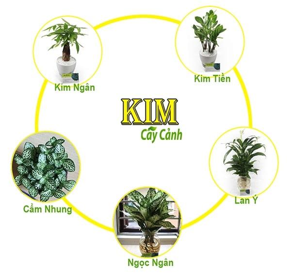 Một số cây phong thủy phù hợp trang trí phòng khách cho người mệnh Kim