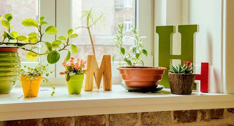 Nên chọn loại cây xanh nào để trang trí trong nhà?