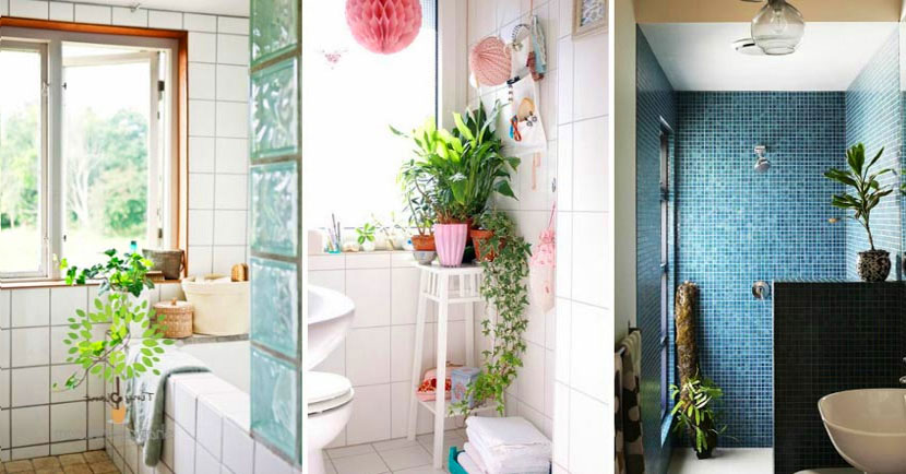 Phòng tắm - nhà vệ sinh và cách trang trí cây xanh